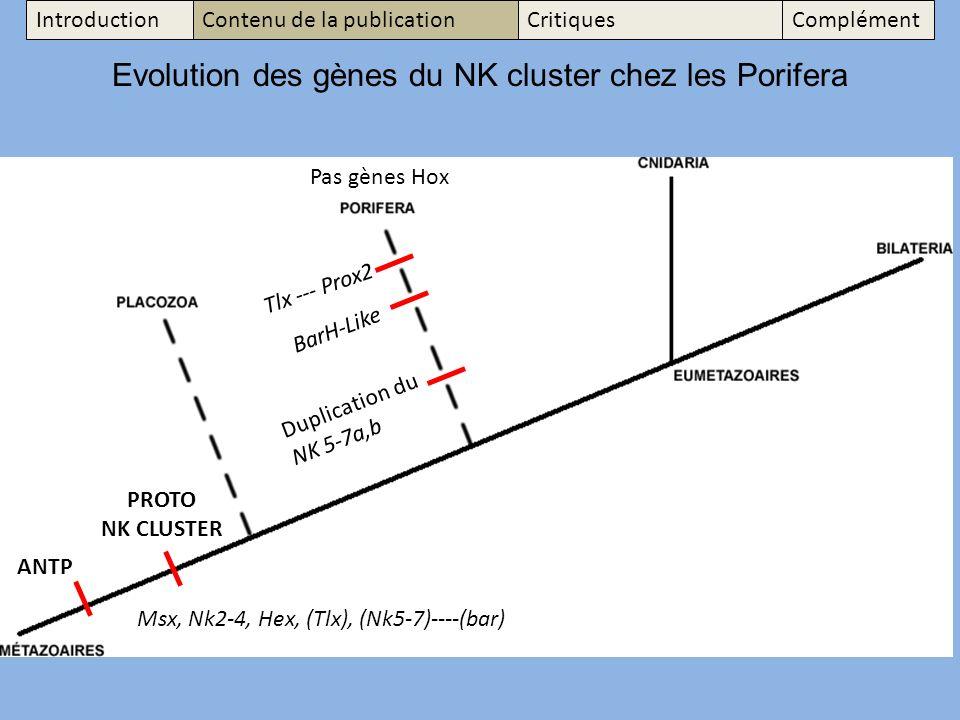 Msx, Nk2-4, Hex, (Tlx), (Nk5-7)----(bar) Evolution des gènes du NK cluster chez les Porifera Tlx --- Prox2 BarH-Like Duplication du NK 5-7a,b ANTP PROTO NK CLUSTER Pas gènes Hox IntroductionContenu de la publicationCritiquesComplément