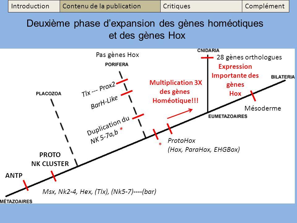 Msx, Nk2-4, Hex, (Tlx), (Nk5-7)----(bar) Deuxième phase dexpansion des gènes homéotiques et des gènes Hox Tlx --- Prox2 BarH-Like Duplication du NK 5-7a,b * ANTP * Multiplication 3X des gènes Homéotique!!.