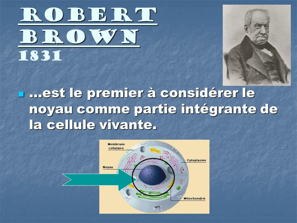Robert Brown Robert Brown 1831 …est le premier à considérer le noyau comme partie intégrante de la cellule vivante. …est le premier à considérer le no
