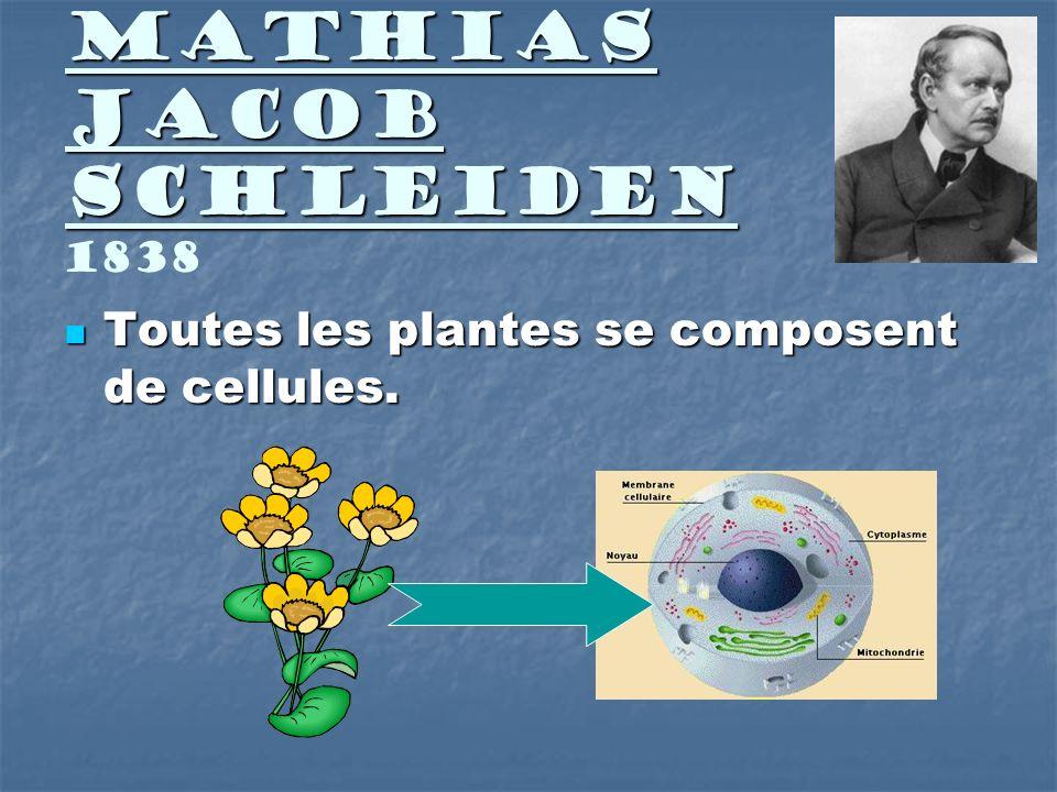 Mathias Jacob Schleiden Mathias Jacob Schleiden 1838 Toutes les plantes se composent de cellules. Toutes les plantes se composent de cellules.