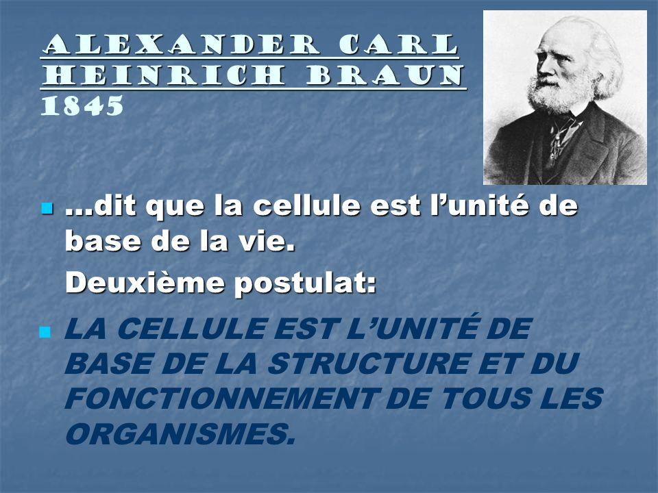 Alexander Carl Heinrich Braun Alexander Carl Heinrich Braun 1845 …dit que la cellule est lunité de base de la vie. …dit que la cellule est lunité de b
