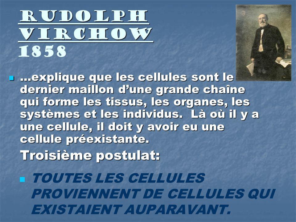 Rudolph Virchow Rudolph Virchow 1858 …explique que les cellules sont le dernier maillon dune grande chaîne qui forme les tissus, les organes, les syst