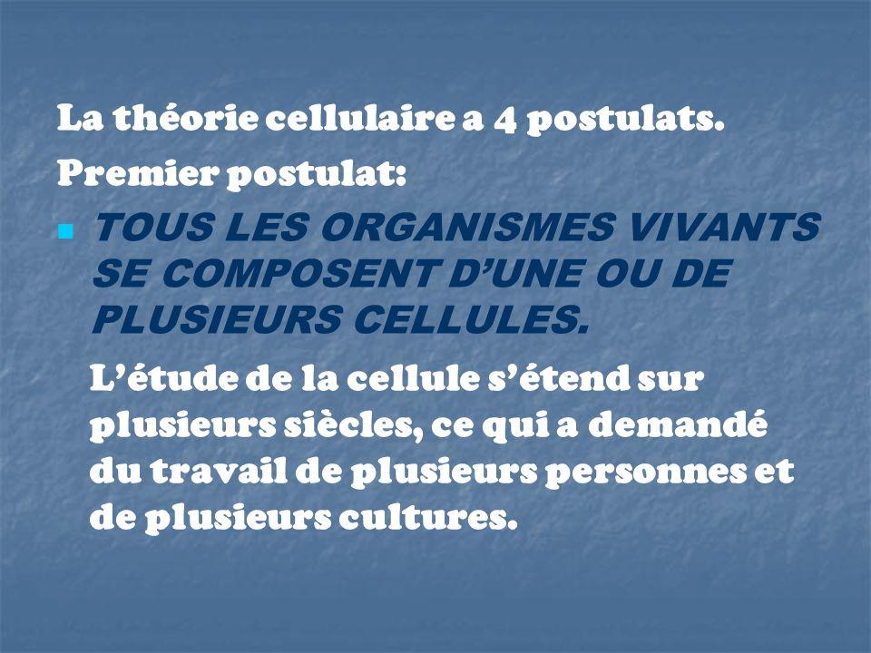 La théorie cellulaire a 4 postulats. Premier postulat: TOUS LES ORGANISMES VIVANTS SE COMPOSENT DUNE OU DE PLUSIEURS CELLULES. Létude de la cellule sé