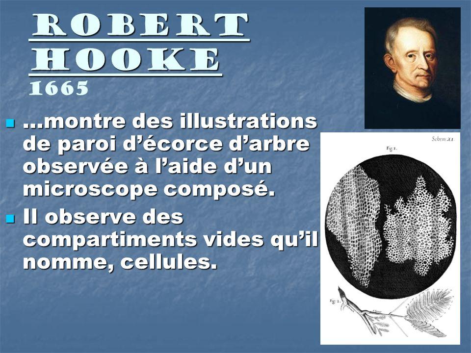 Robert Hooke Robert Hooke 1665 …montre des illustrations de paroi décorce darbre observée à laide dun microscope composé. …montre des illustrations de