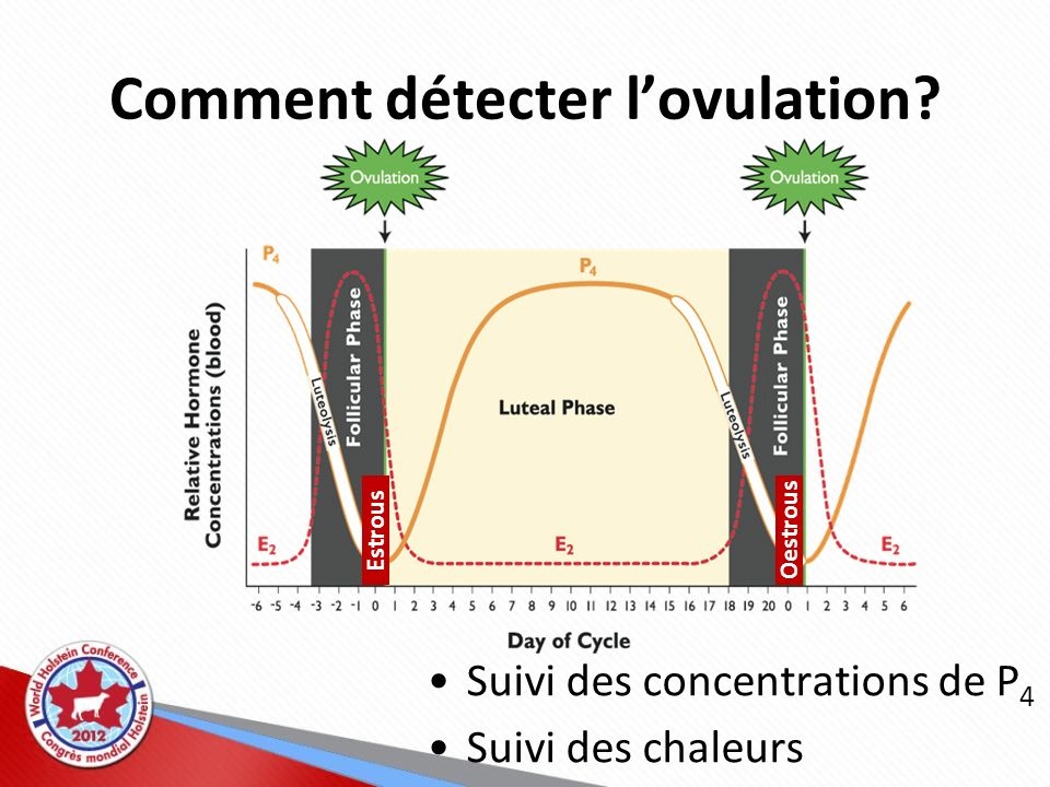 Comment détecter lovulation? Estrous Oestrous Suivi des concentrations de P 4 Suivi des chaleurs