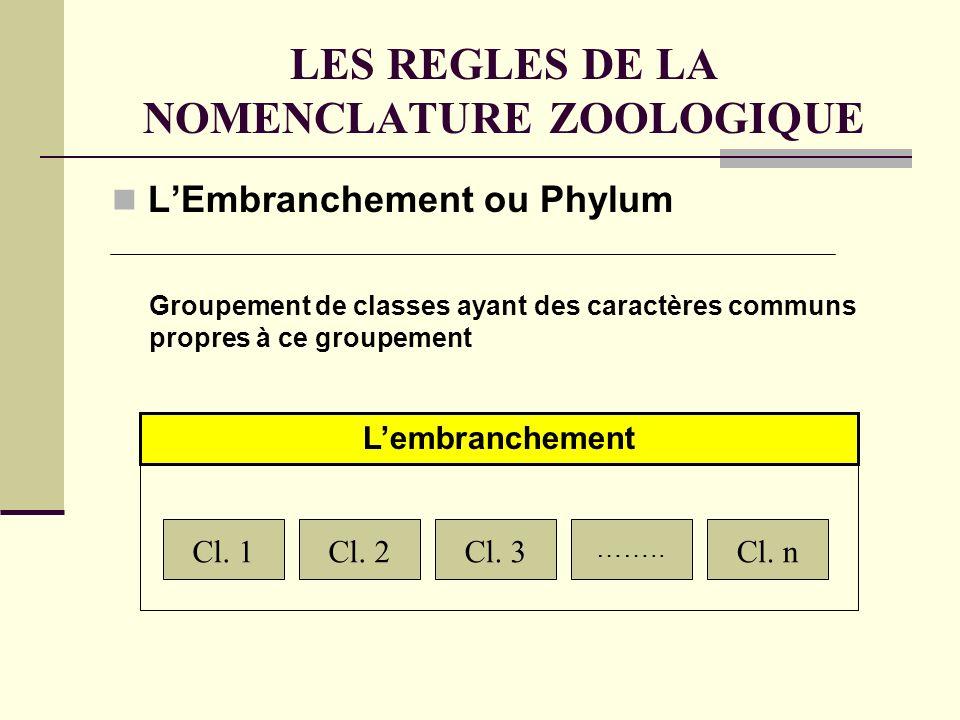 LES REGLES DE LA NOMENCLATURE ZOOLOGIQUE LEmbranchement ou Phylum Cl.