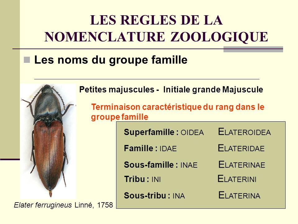 LES REGLES DE LA NOMENCLATURE ZOOLOGIQUE Les noms du groupe famille Terminaison caractéristique du rang dans le groupe famille Petites majuscules - Initiale grande Majuscule Superfamille : OIDEA E LATEROIDEA Famille : IDAE E LATERIDAE Sous-famille : INAE E LATERINAE Tribu : INI E LATERINI Sous-tribu : INA E LATERINA Elater ferrugineus Linné, 1758