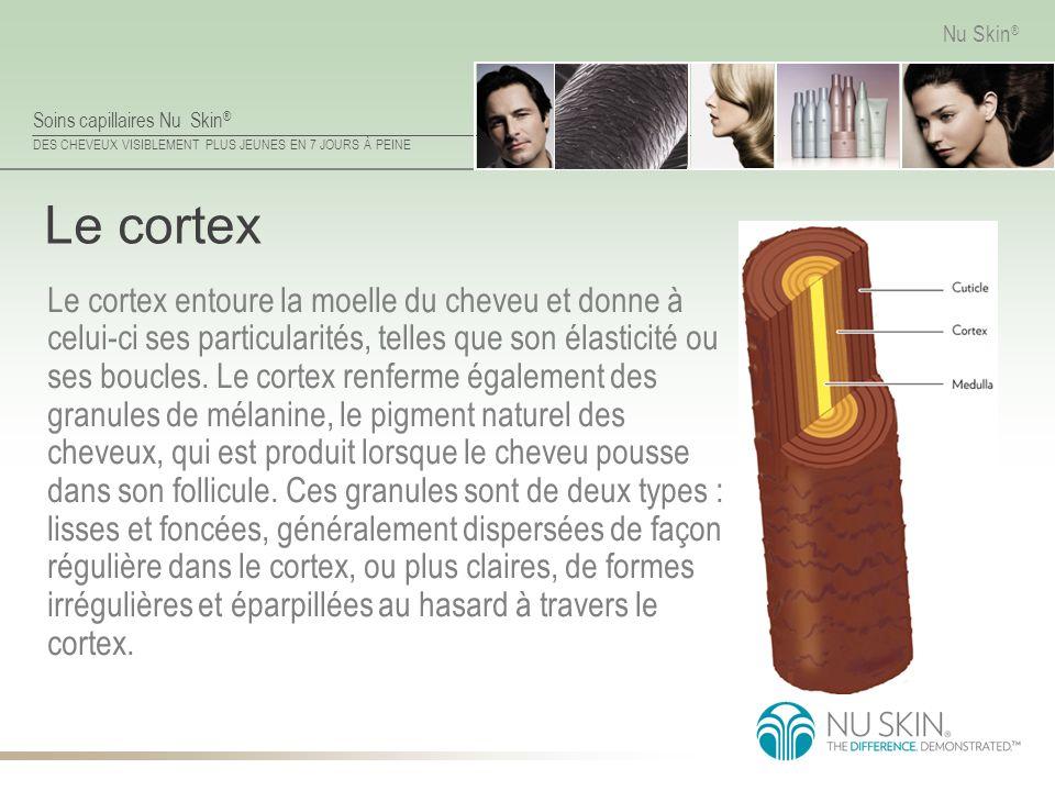 Soins capillaires Nu Skin ® DES CHEVEUX VISIBLEMENT PLUS JEUNES EN 7 JOURS À PEINE Nu Skin ® Le cortex Le cortex entoure la moelle du cheveu et donne