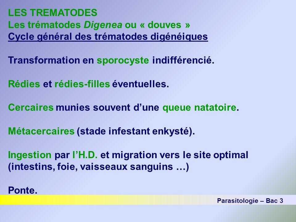 LES TREMATODES Les trématodes Digenea ou « douves » Cycle général des trématodes digénéiques Transformation en sporocyste indifférencié. Rédies et réd