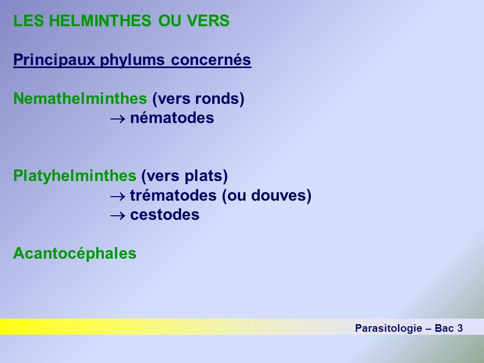 LES HELMINTHES OU VERS Principaux phylums concernés Nemathelminthes (vers ronds) nématodes Platyhelminthes (vers plats) trématodes (ou douves) cestode