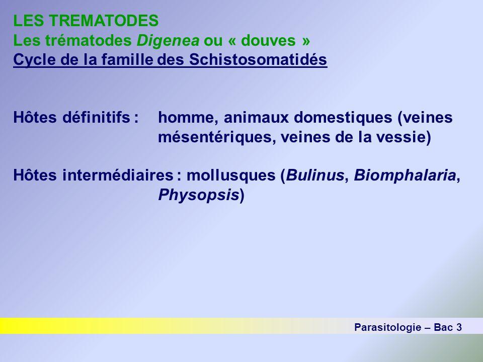 LES TREMATODES Les trématodes Digenea ou « douves » Cycle de la famille des Schistosomatidés Hôtes définitifs :homme, animaux domestiques (veines mése