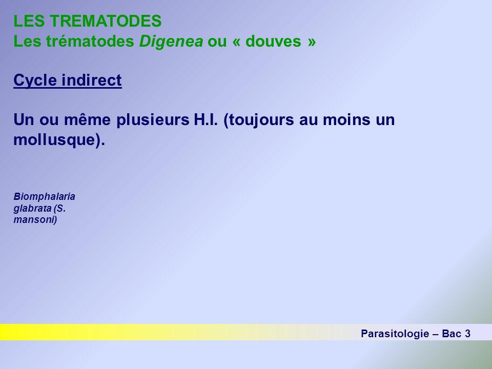 LES TREMATODES Les trématodes Digenea ou « douves » Cycle indirect Un ou même plusieurs H.I. (toujours au moins un mollusque). Parasitologie – Bac 3 B