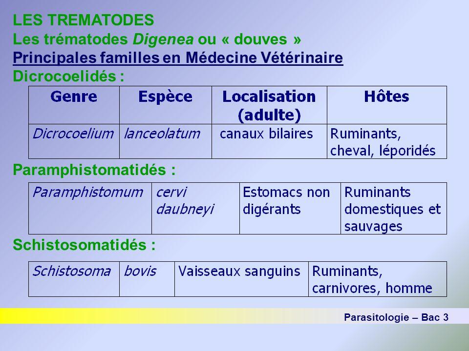 LES TREMATODES Les trématodes Digenea ou « douves » Cycle de la famille des Schistosomatidés Parasites des vaisseaux sanguins (tube digestif, vessie) Importante famille sur le plan tropical (250 millions dêtres humains infectés) Sexes séparés Genre Schistosoma le plus important Parasitologie – Bac 3
