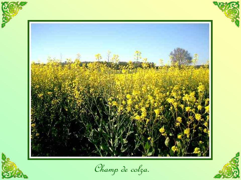 Lair frais des champs; voilà notre vraie place; il semble que là, lesprit de Dieu entoure lhomme de son souffle, et quil soit soumis à une influence divine.