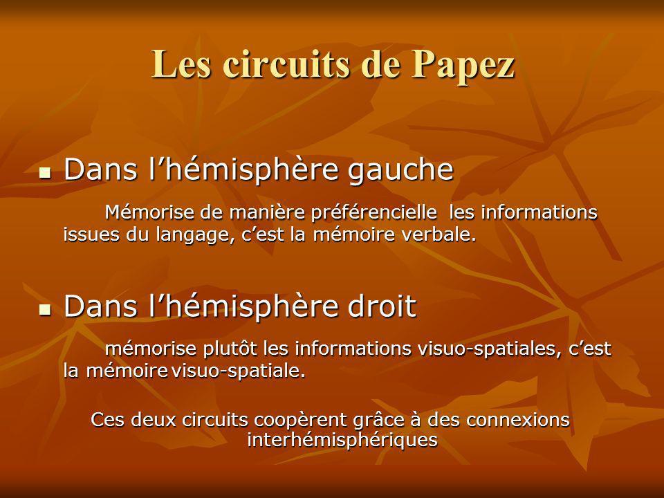 Les circuits de Papez Dans lhémisphère gauche Dans lhémisphère gauche Mémorise de manière préférencielle les informations issues du langage, cest la m