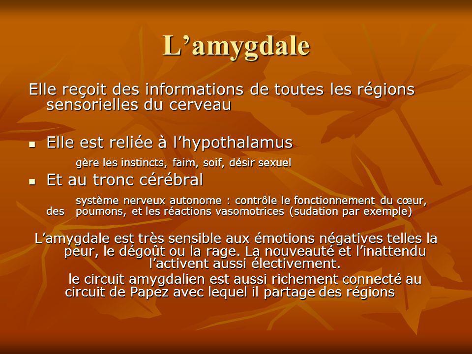 Lamygdale Elle reçoit des informations de toutes les régions sensorielles du cerveau Elle est reliée à lhypothalamus Elle est reliée à lhypothalamus g
