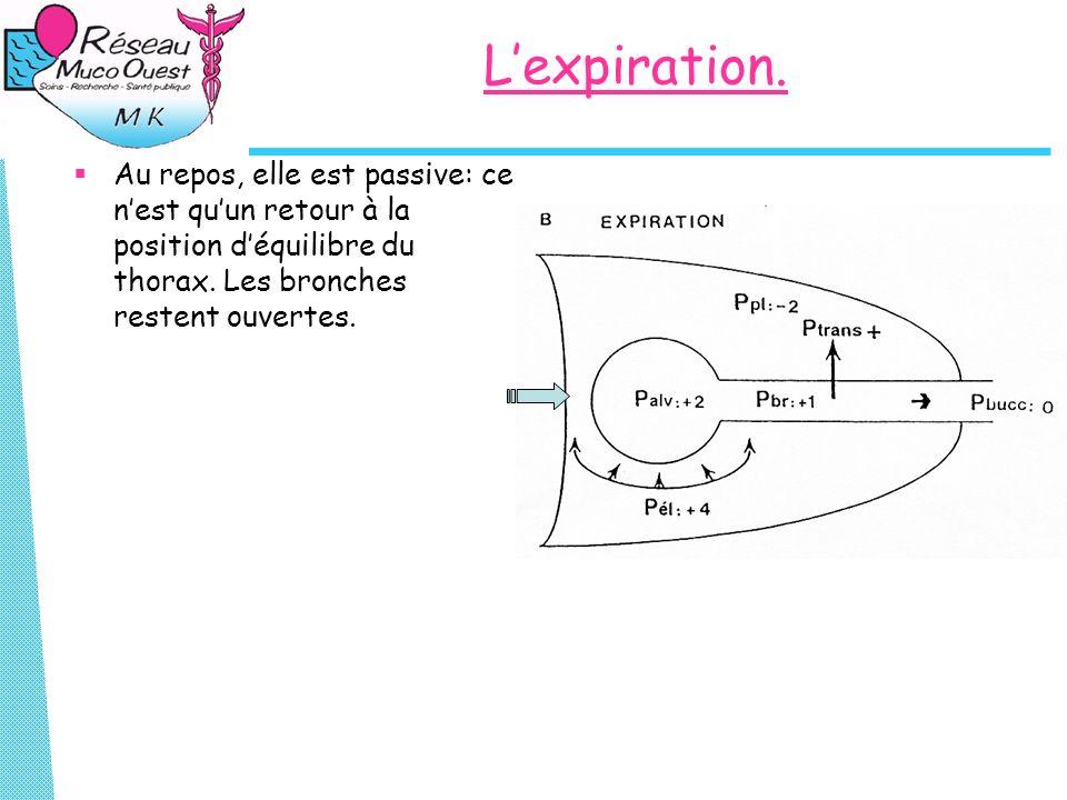 Lexpiration. Au repos, elle est passive: ce nest quun retour à la position déquilibre du thorax. Les bronches restent ouvertes.