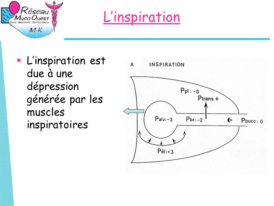 Lexpiration Au repos, elle est passive: ce nest quun retour à la position déquilibre du thorax.