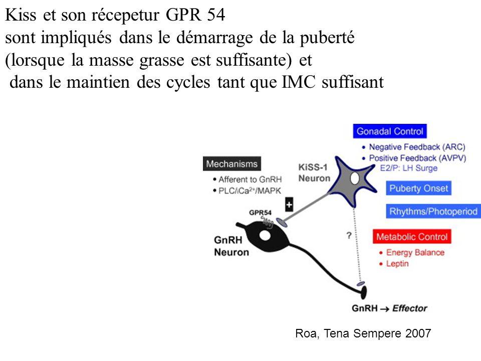 Kiss et son récepetur GPR 54 sont impliqués dans le démarrage de la puberté (lorsque la masse grasse est suffisante) et dans le maintien des cycles tant que IMC suffisant