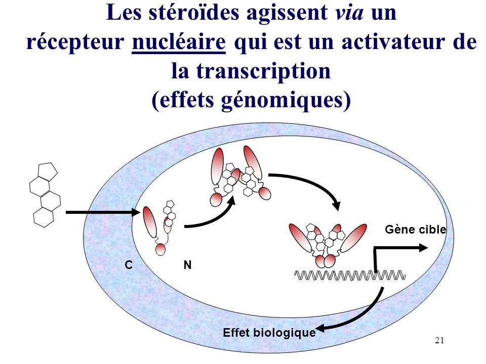 21 Les stéroïdes agissent via un récepteur nucléaire qui est un activateur de la transcription (effets génomiques) CN Gène cible Effet biologique P