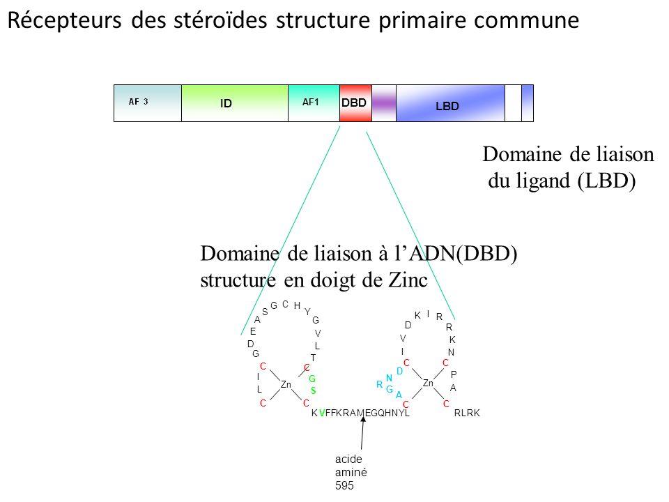 5693 3 63 165 LBD AF1 ID DBD A I V L C L N G G T G R C Y C S G G H Zn R D C K A I E R N R L RK K D A K VFF KR AMEGQHNYL CC D C S Zn P I V C C acide aminé 595 Récepteurs des stéroïdes structure primaire commune Domaine de liaison à lADN(DBD) structure en doigt de Zinc Domaine de liaison du ligand (LBD)