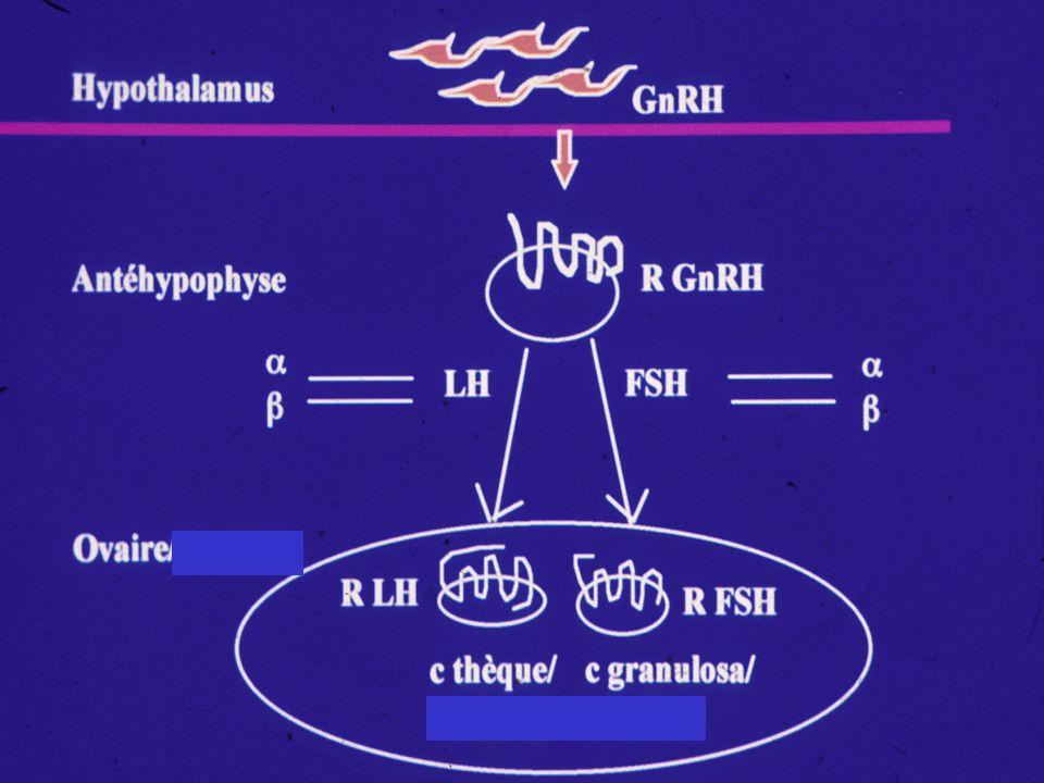 GnRH Activin B LH/FSH E 2 /P 4 Inhibin A/B Brain Pituitary Follistatin Ovary FSH LH INH B Testo Chez lhomme Sertoli Leydig