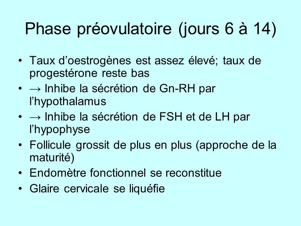 Phase préovulatoire (jours 6 à 14) Taux doestrogènes est assez élevé; taux de progestérone reste bas Inhibe la sécrétion de Gn-RH par lhypothalamus In