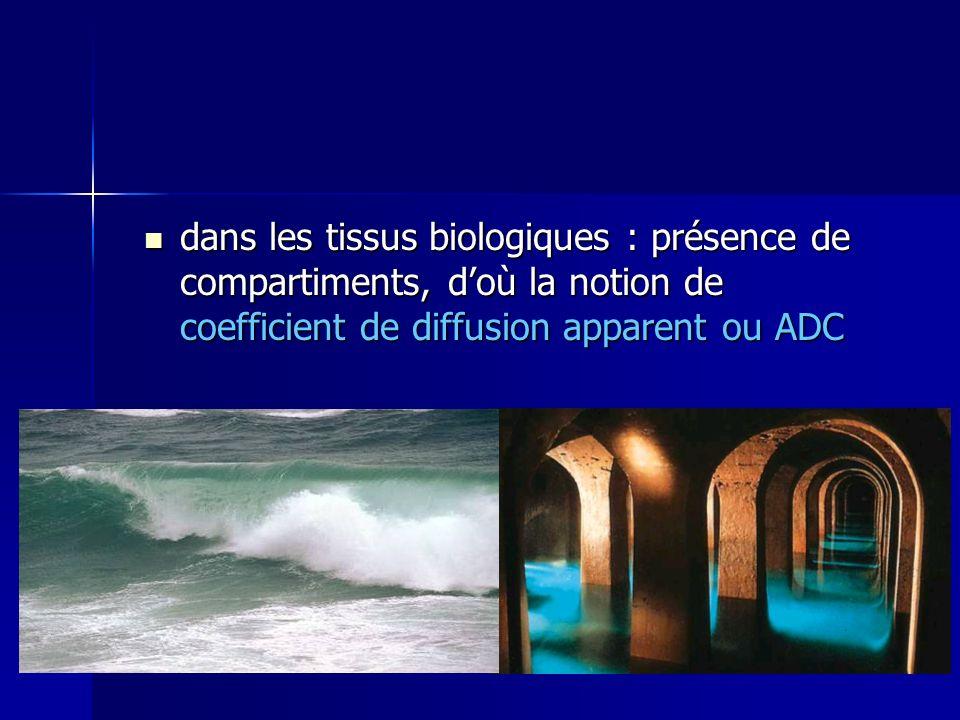 dans les tissus biologiques : présence de compartiments, doù la notion de coefficient de diffusion apparent ou ADC dans les tissus biologiques : prése