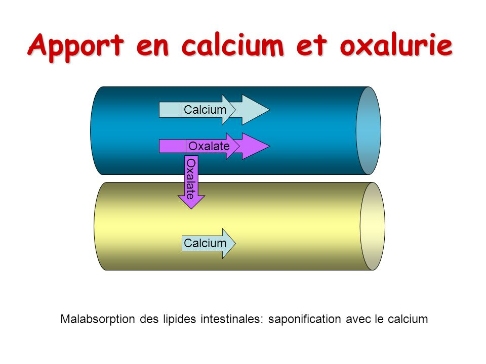 Apport en calcium et oxalurie Calcium Oxalate Calcium Oxalate Calcium Malabsorption des lipides intestinales: saponification avec le calcium