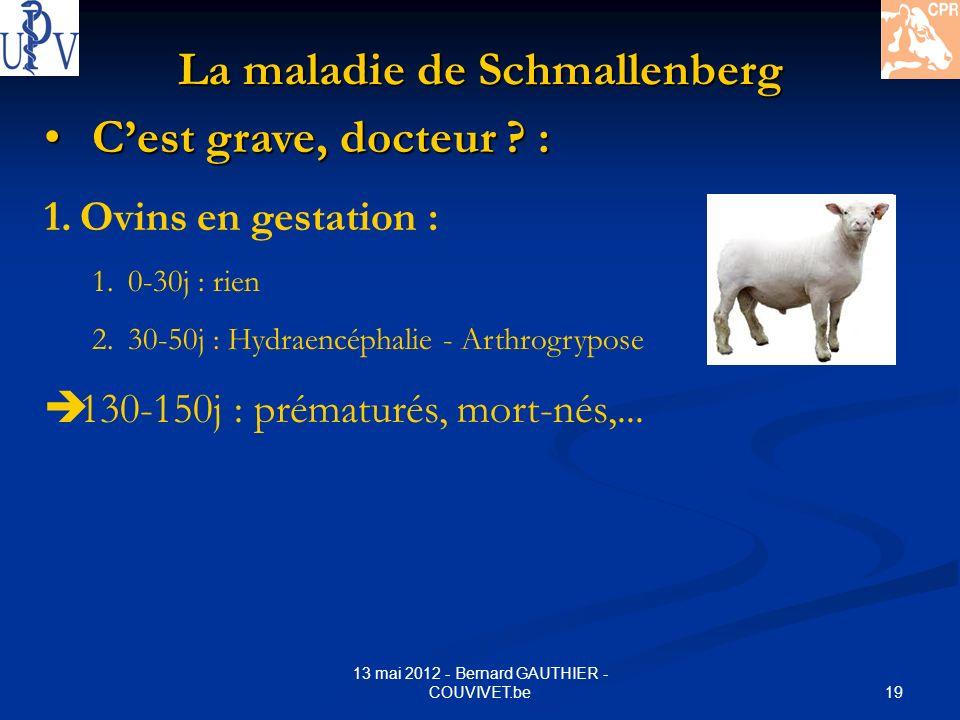 19 13 mai 2012 - Bernard GAUTHIER - COUVIVET.be La maladie de Schmallenberg Cest grave, docteur ? : Cest grave, docteur ? : 1.Ovins en gestation : 1.0