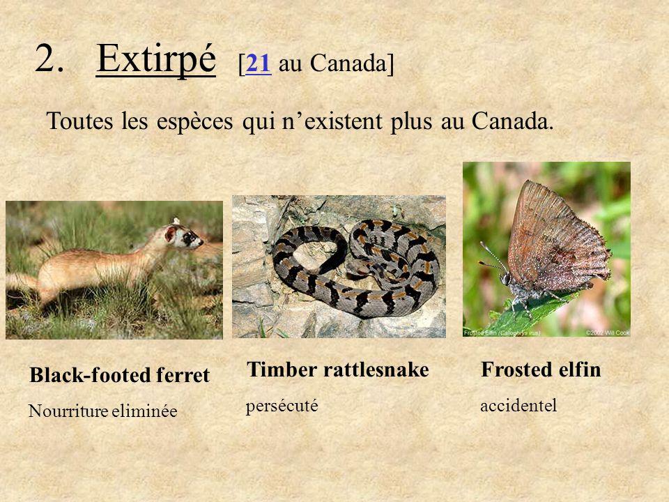 2. Extirpé [21 au Canada] Toutes les espèces qui nexistent plus au Canada. Timber rattlesnake persécuté Frosted elfin accidentel Black-footed ferret N