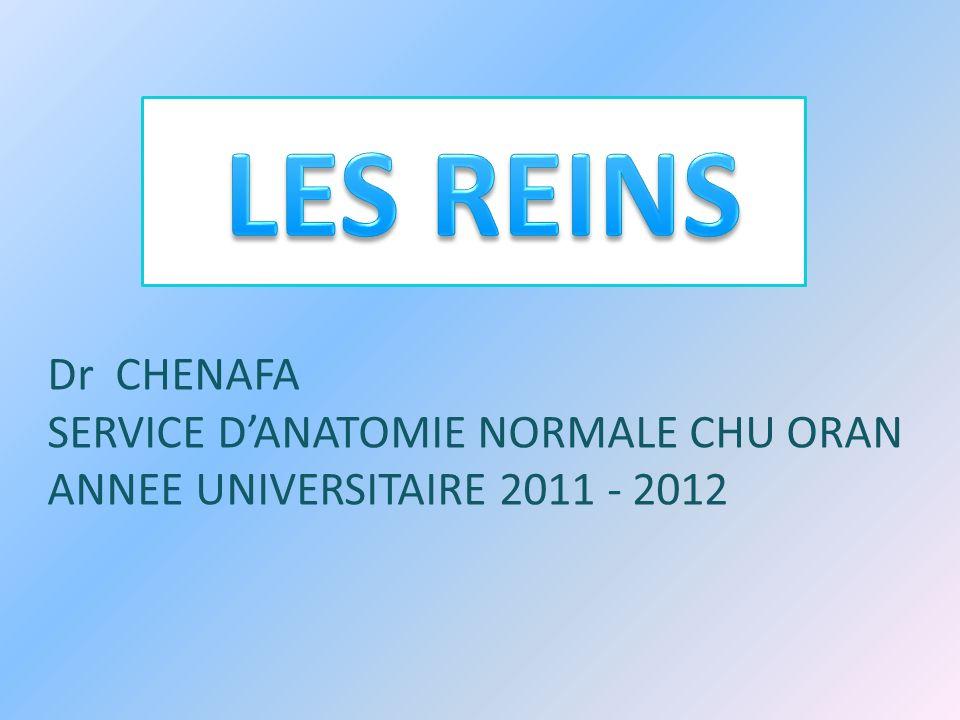 Dr CHENAFA SERVICE DANATOMIE NORMALE CHU ORAN ANNEE UNIVERSITAIRE 2011 - 2012