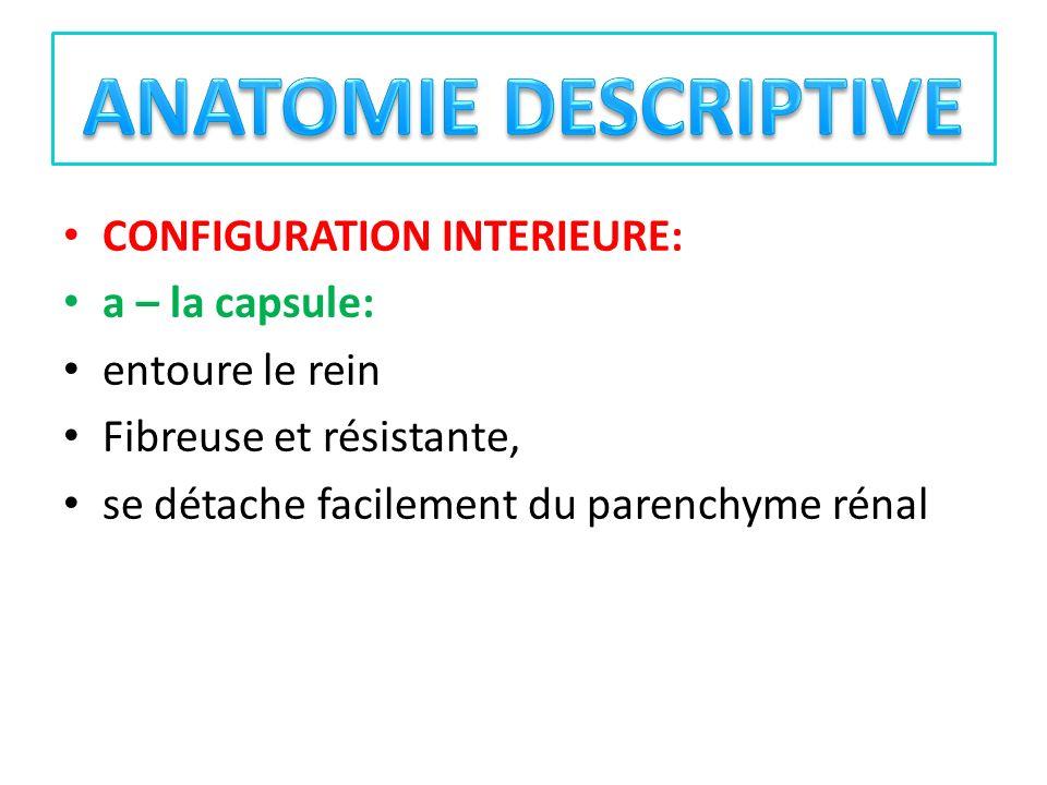 CONFIGURATION INTERIEURE: a – la capsule: entoure le rein Fibreuse et résistante, se détache facilement du parenchyme rénal
