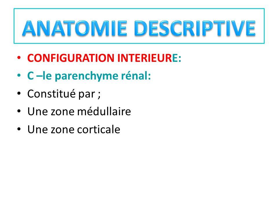CONFIGURATION INTERIEURE: C –le parenchyme rénal: Constitué par ; Une zone médullaire Une zone corticale