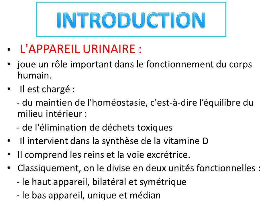CONFIGURATION INTERIEURE: b- le sinus rénale: Cavité contenant: 1-les voies excrétrices : - Les petites calices (calices mineur) : au nombre de 08 à 12.