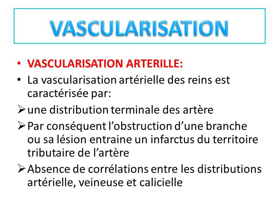 VASCULARISATION ARTERILLE: La vascularisation artérielle des reins est caractérisée par: une distribution terminale des artère Par conséquent lobstruc