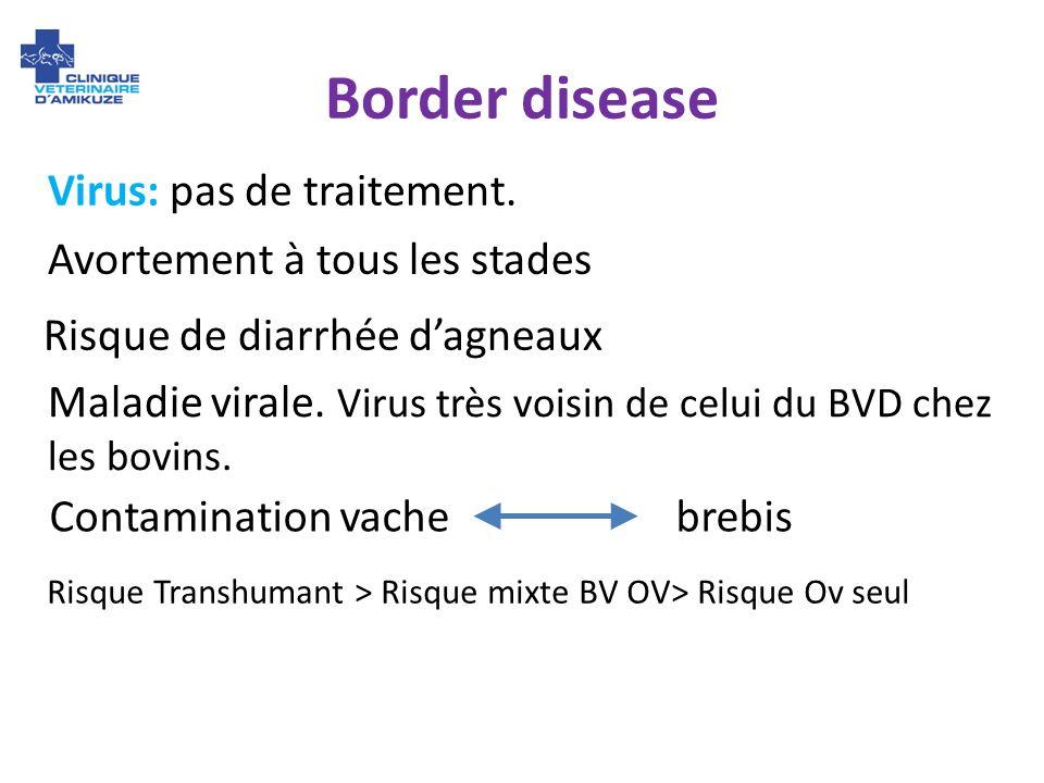 Border disease Maladie virale. Virus très voisin de celui du BVD chez les bovins. Contamination vache brebis Avortement à tous les stades Risque de di