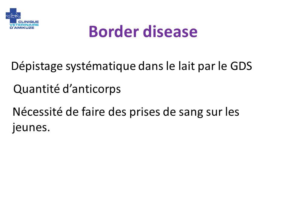 Border disease Dépistage systématique dans le lait par le GDS Quantité danticorps Nécessité de faire des prises de sang sur les jeunes.