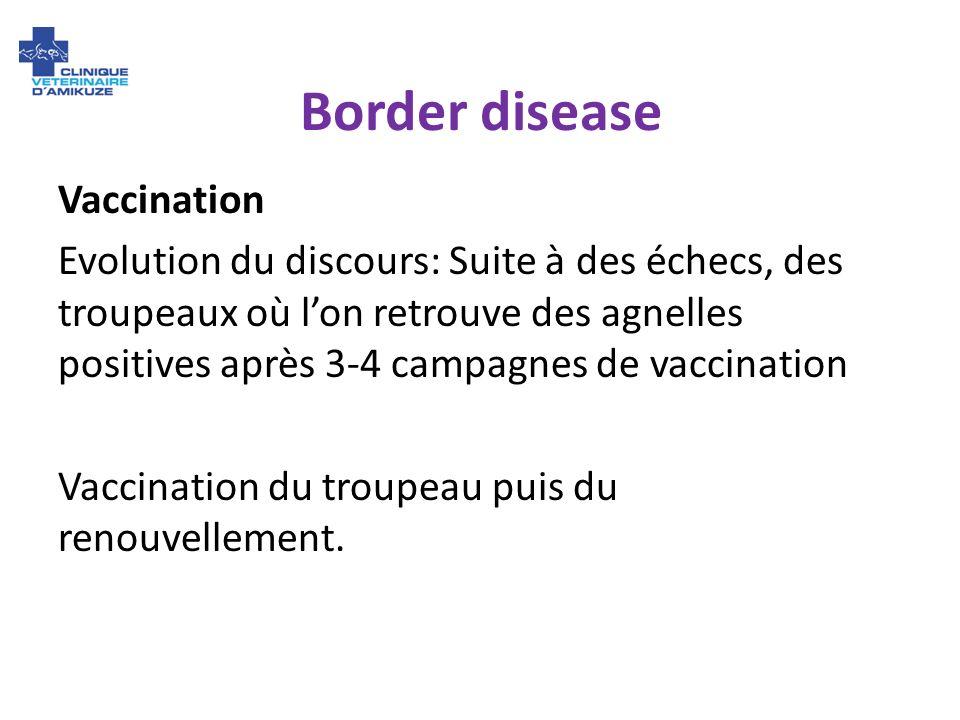 Border disease Vaccination Evolution du discours: Suite à des échecs, des troupeaux où lon retrouve des agnelles positives après 3-4 campagnes de vacc