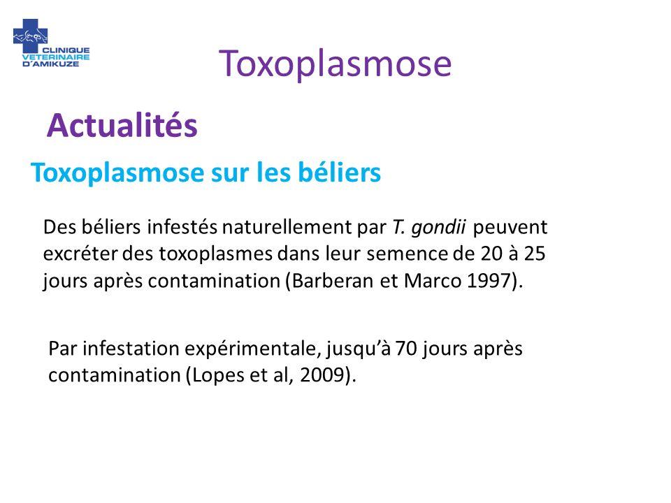 Toxoplasmose Actualités Des béliers infestés naturellement par T. gondii peuvent excréter des toxoplasmes dans leur semence de 20 à 25 jours après con
