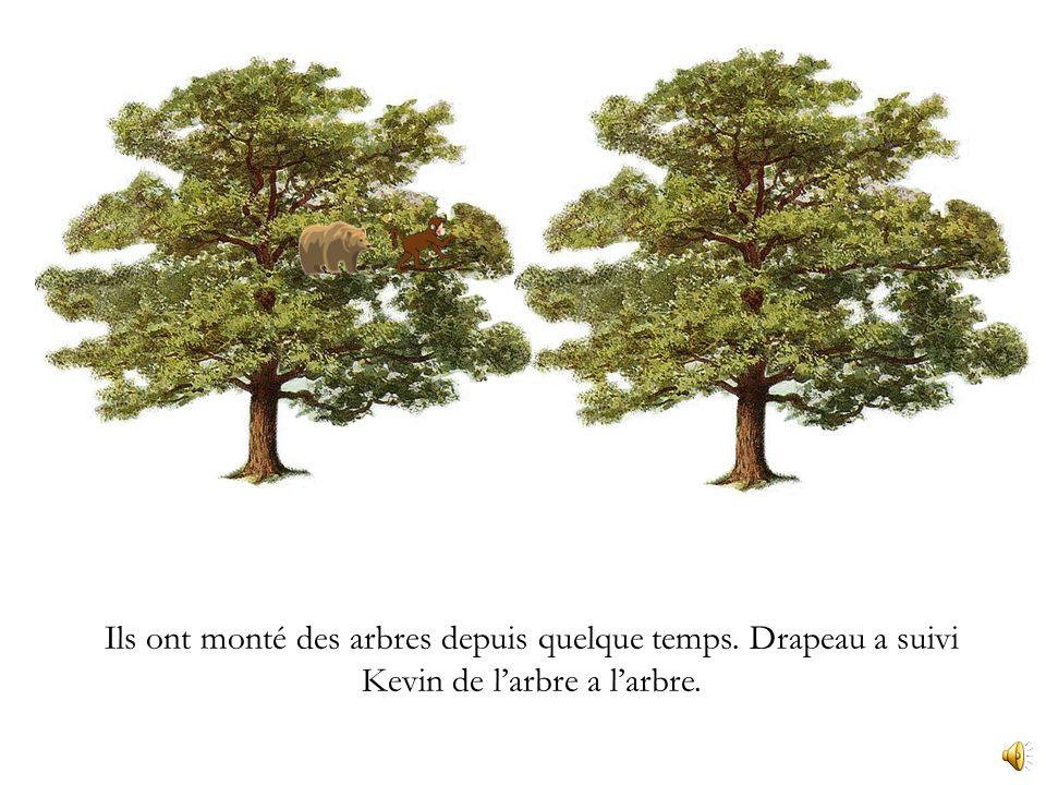 Drapeau et Kevin ont choisi un arbre à monter. Tiens, allons monter celui-ci. Bien sûr!