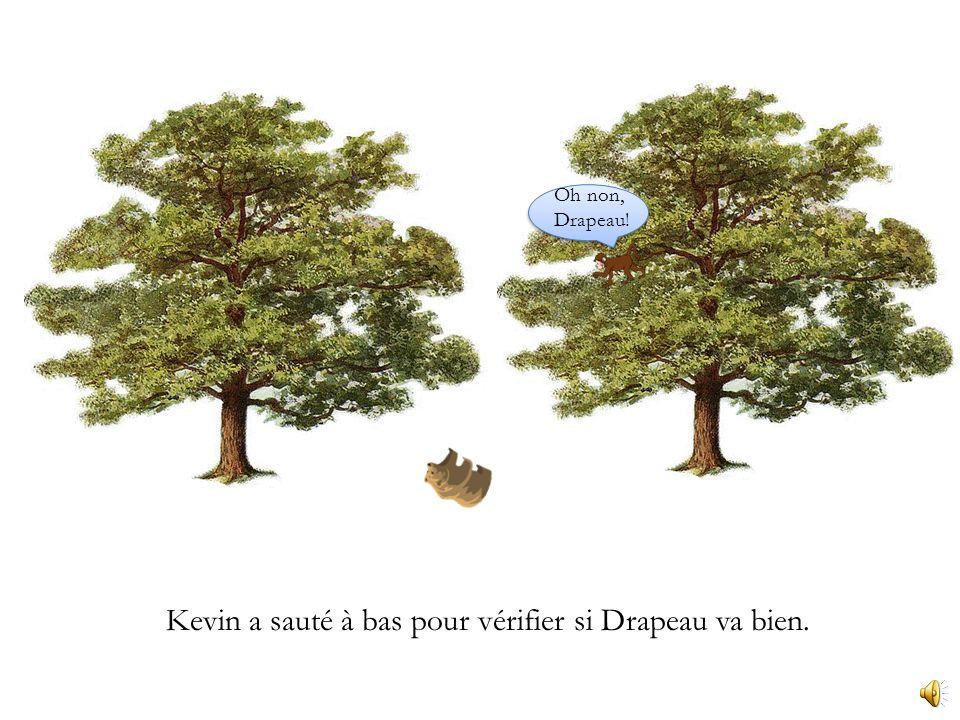 Kevin a sauté dune branche au prochain arbre.