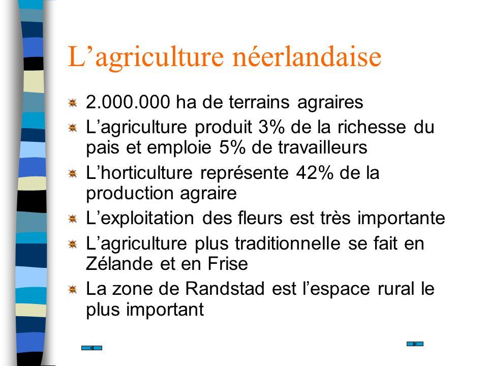 Lagriculture néerlandaise 2.000.000 ha de terrains agraires Lagriculture produit 3% de la richesse du pais et emploie 5% de travailleurs Lhorticulture