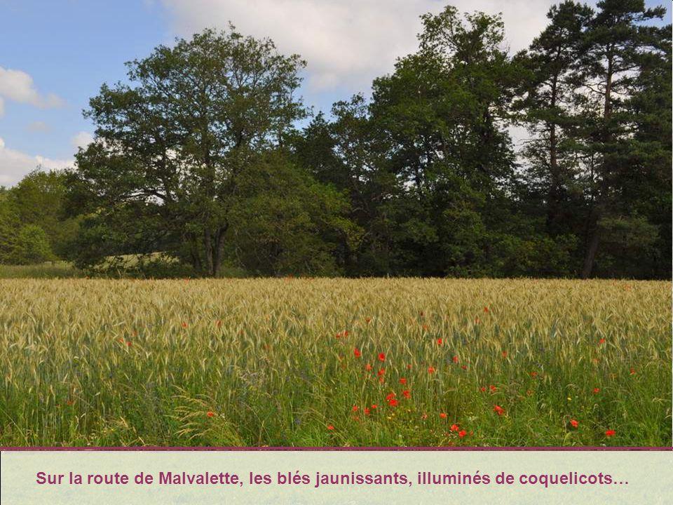 Halte émerveillée à Saint Bonnet- le-Château. Jessaierai, du mieux que je peux, dans un autre diaporama, de vous faire partager cet émerveillement !