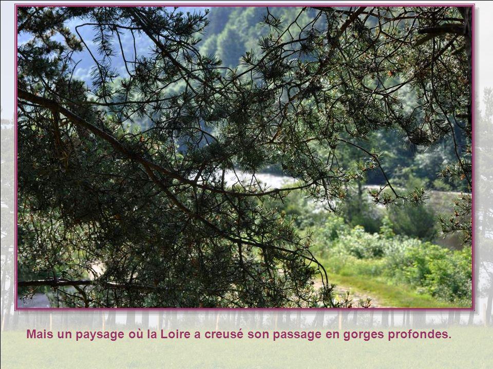Mais un paysage où la Loire a creusé son passage en gorges profondes.