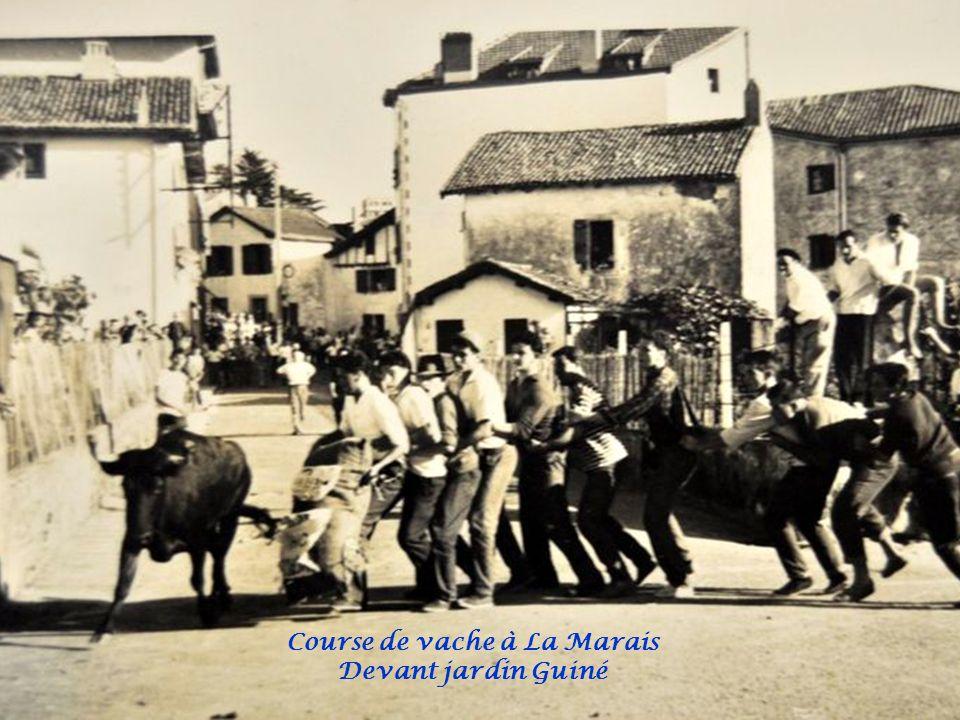 Course de vache à La Marais Buvette Belzenia