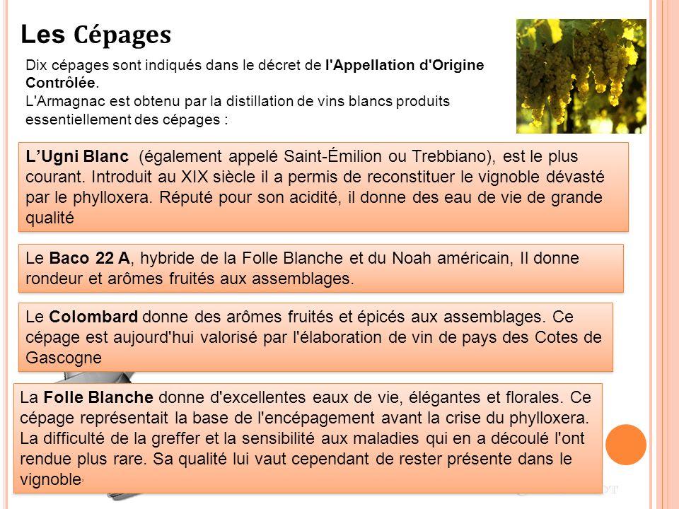 Dix cépages sont indiqués dans le décret de l'Appellation d'Origine Contrôlée. L'Armagnac est obtenu par la distillation de vins blancs produits essen