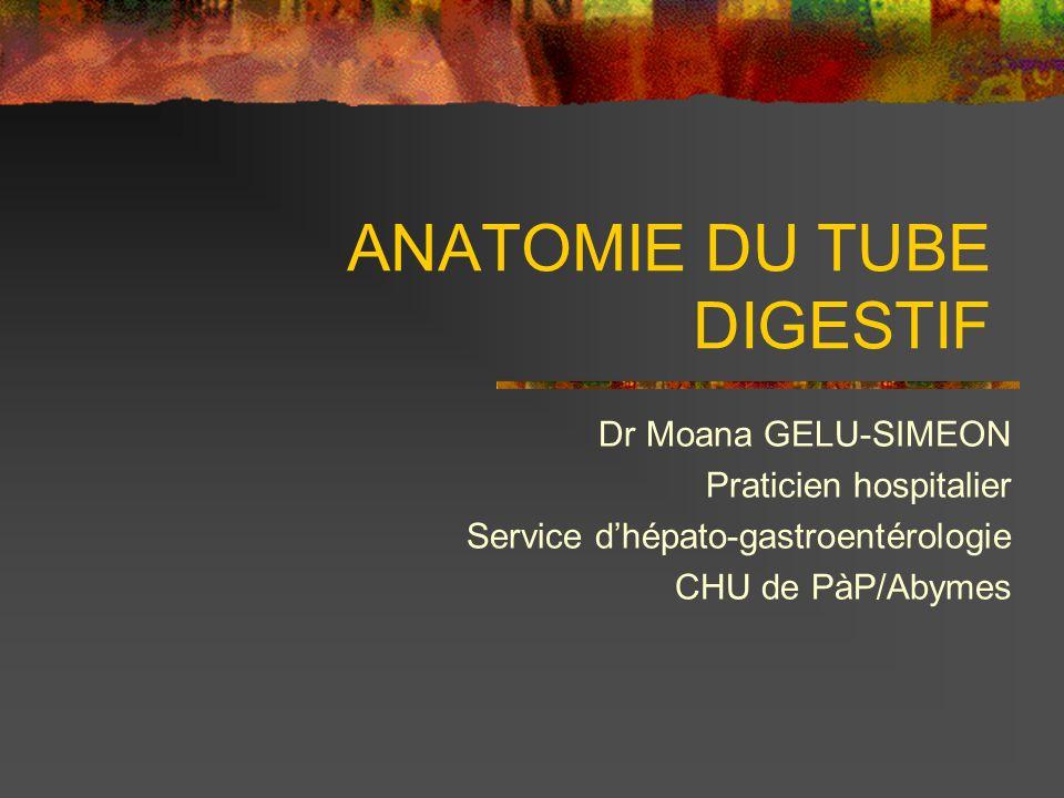 ANATOMIE DU TUBE DIGESTIF Dr Moana GELU-SIMEON Praticien hospitalier Service dhépato-gastroentérologie CHU de PàP/Abymes