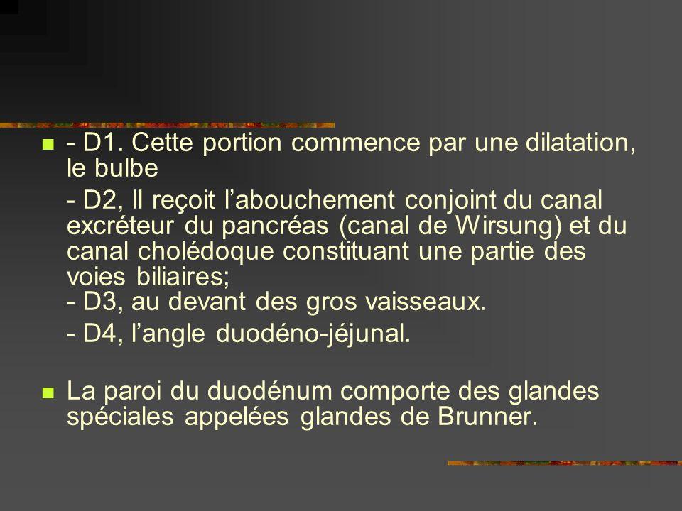 - D1. Cette portion commence par une dilatation, le bulbe - D2, Il reçoit labouchement conjoint du canal excréteur du pancréas (canal de Wirsung) et d