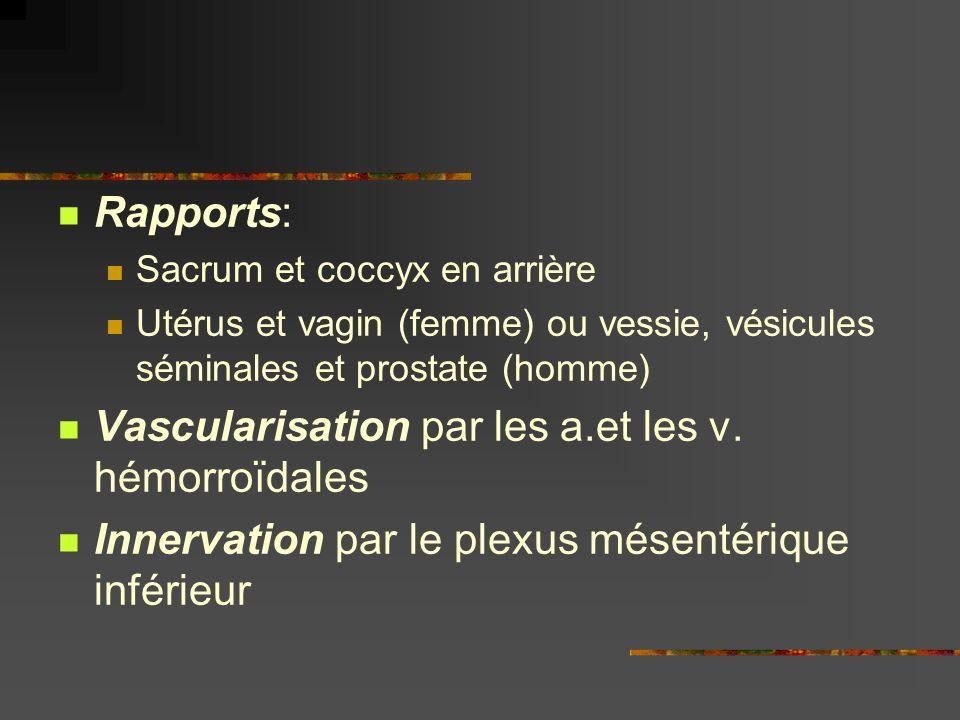Rapports: Sacrum et coccyx en arrière Utérus et vagin (femme) ou vessie, vésicules séminales et prostate (homme) Vascularisation par les a.et les v. h